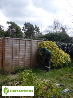 Reliable Garden Maintenance Services around Tower Hill EC3