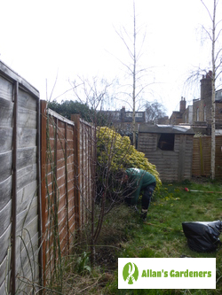 Accurate Garden Maintenance Services in St James SE1