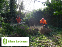 Outstanding Tree Surgery in the Area of London